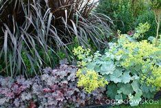 Ogród mały, ale pojemny;) - strona 54 - Forum ogrodnicze - Ogrodowisko