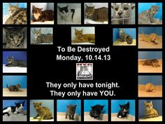 21 cats are in danger. The shelter opens @ 8AM. Go to the ACC website http://www.nycacc.org/PublicAtRisk.htm to adopt a PUBLIC LIST cat (noted on their profile) but ONLY if you're able to GO TO the shelter IN person w/in 48hrs. Or work w/a rescue group if you can adopt/foster ANY cat tonight. Instructions & a list of rescues: https://www.facebook.com/notes/pets-on-death-row/rescue-contact-information/320666967994014?f=ts