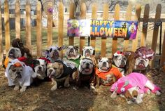 Girls--it's the Bulldog Farm all dressed for Halloween!