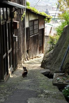 Cat in Japan. Japanese Landscape, Japanese Architecture, Tottori, Japan Street, Japanese Streets, Blue Exorcist, To Infinity And Beyond, Photo Reference, Japan Travel