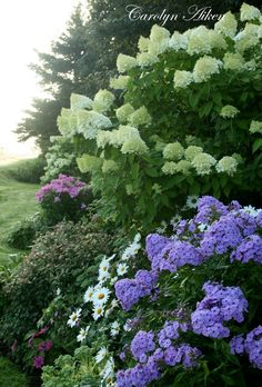 Aiken House & Gardens - phlox, hydrangea, daisies