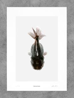 Morbid Being N° 5 - Bienvenue Publishing - Shop Indoor Pond, Goldfish, Fascinator, Nature, Aesthetics, Welcome, Headdress, Naturaleza, Nature Illustration