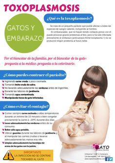 Conoce más sobre la toxoplasmosis y los gatos