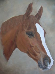 "Chestnut Arab gelding by Tania Robinson, 2010. Acrylic on canvas 16"" x 20"""