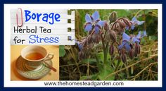 Learn how to use Borage Herbal Tea for Stress. Borage is a beautiful herb for anyone's garden and has some amazing medicinal benefits as well. Learn more in this post.