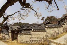2014 도산서원 매화(2014. 3. 30)