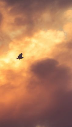 Bird Fly Sky Clouds Red Sunset Nature Animal #iPhone #6 #plus #wallpaper