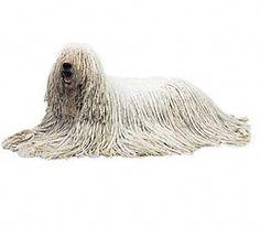 Todas las razas de perros del Mundo (Megapost Ampliable).