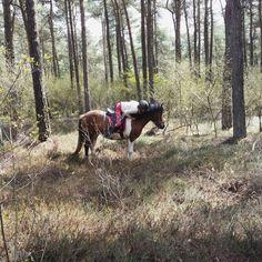Fina in het bos, op vakantie Drenthe, wat een super pony!