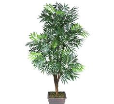 One 6' Phoenix Palm Artificial Tree with 5 Heads, with No Pot, ** More info could be found at the image url.