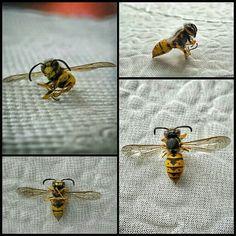 Çalışkandır arı;son ana kadar durmadan çalışır. Ve kimbilir hangi çiçeğe doğru uçmaktaydı?