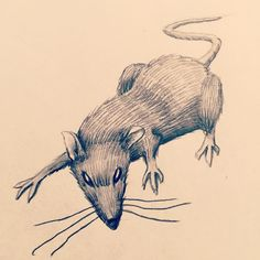 #rat #sketch #art #rodent #drawing #pencil #mouse #artist