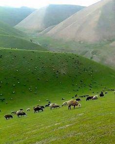 Astore Valley, Gilgit Baltistan, Pakistan.