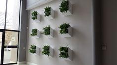 Wall Box Wall Coverings