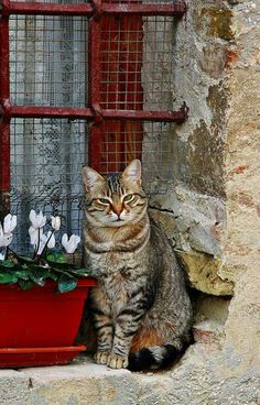 Cat in the window... Love ❤️