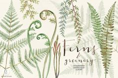 Watercolor fern art by GrafikBoutique on @creativemarket