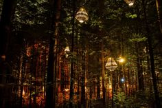 David Trubridge lights up Redwoods Treewalk Rotorua - Tourism New Zealand Media Tulum, Places To Travel, Places To See, New Zealand Winter, North Island New Zealand, Night Forest, Redwood Forest, Garden Lamps, Need A Vacation
