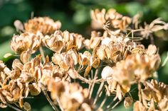 Autumn colours   #perspective  #photographer  #Exposure  #Outdoor  #contrast  #Photography  #Nature  #wonder  #flower  #color  #Light  #composition  #Dramatic  #Amazing  #moment  #Closeup  #bokeh  #autumn  #Macro  #mothernature  #delicate  #Naturephotography  #withimpact  #neverstopexploring  #Pure  #travel  #explore   #Worldprime  #fall  #beautiful