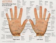 This comprehensive foot and hand reflexology chart is double-sided, with the hand chart on one side and the foot chart on the other. Under each reflex point is a list of doTERRA oils that can be applied at that particular organ or area of the body. Essential Oil Chart, Essential Oil Uses, Doterra Essential Oils, Doterra Blends, Reflexology Points, Hand Reflexology, Hand Massage, Massage Oil, Lymph Massage