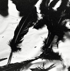 He had a Heart of Crow Feathers. Light & Unburdened but still Black as Night. -PM.