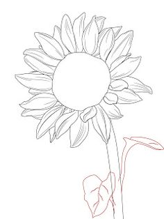 How to draw flowers step by step with pencil google search how to draw a sunflower ccuart Image collections