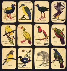 Extinction risk factors for New Zealand birds today differ from those of the past
