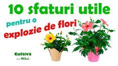 Hibiscus, Herbs, Fruit, Garden, Youtube, Plant, Garten, Lawn And Garden, Herb