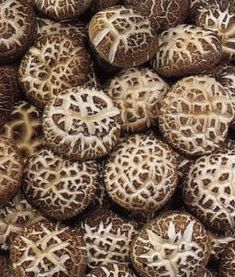 Shiitake  Immune Booster / Reduces Cholesterol / Prevents Cancer / Prevents Thrombosis / Aids in Weight Loss / High in Iron