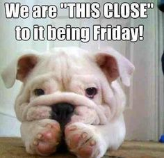 we are so close to friday!