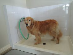 "Tip #24: ""Install a shower basin, tiled on three sides, in your garage. It's a great place to bathe your dog. My Golden, Jessie, loves her 'paw station'."" – Karen Asp, Dog Fancy Columnist/Contributing Editor #ModernMutt"