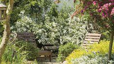 Rozkvetlý ráj. Pouhé tři keře časně kvetoucího tavolníku van Houtteova (Spiraea x vanhouttei) vytvářejí květovanou zástěnu jako ze sna.