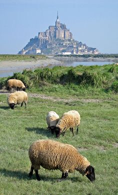 Mont Saint Michel Pastoral Scenery by Jason's Travel Photography on Flickr