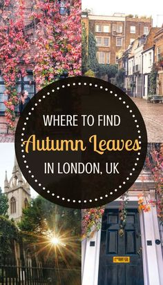 11 of the very best spots in and around London to see autumnal leaves: here's where you can spot the best fall foliage in London!