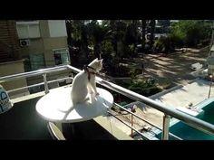 Кот Принц на балконе смотрит на бассейн
