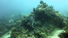 Video Star Puffer   Pata Negra Alona Panglao Bohol Bohol, Scuba Diving, River, Island, Stars, Beach, Outdoor, Diving, Outdoors