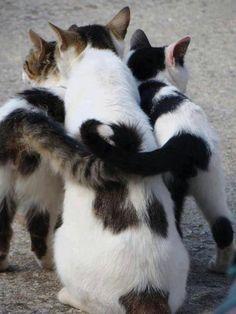 tail hug!