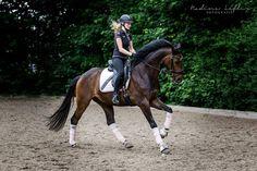 English Style, Horse Photography, Horse Love, Wild Horses, Horse Riding, Dressage, Beautiful Horses, Beautiful Landscapes, Tack