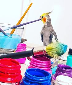 In our house art is in the air! Painted Clothes, House Art, Contemporary Paintings, Insta Art, Parrot, Brushes, Hand Painted, Bird, Artist