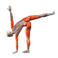 Rotated warrior pose on left foot - Virabhadrasana left - Yoga Poses | YOGA.com
