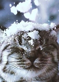 Yay my 2 fave things mixed together!!!!! Cats and snow!!!!!!!