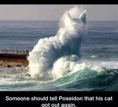 Poseidon's cat is out again.