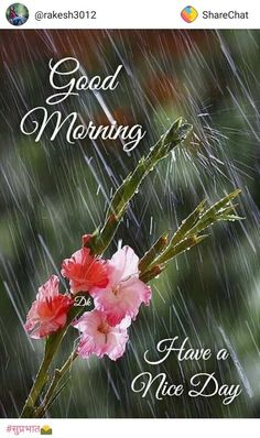 Are you looking for images for good morning motivation?Browse around this website for perfect good morning motivation ideas. These unique images will brighten your day. Latest Good Morning Images, Good Morning Beautiful Flowers, Good Morning Beautiful Images, Good Morning Picture, Morning Pictures, Photos Of Good Morning, Funny Good Morning Images, Morning Pics, Rainy Morning Quotes
