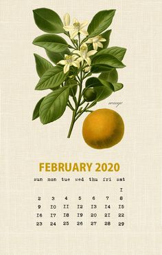 Botanical Fruit 2020 Calendar Printable Templates culinary Fruits Monthly Planner In botany Aggregate fruit Ovary Latest Designs 12 Months Yearly One Page Diy Calender, Art Calendar, Calendar Wallpaper, Calendar Design, Free Printable Calendar Templates, Printable Calendar 2020, Monthly Calendar Template, February Wallpaper, February Calendar