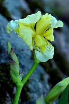 Perennials, Plant Leaves, Colorful, Plants, Plant, Perennial, Planets