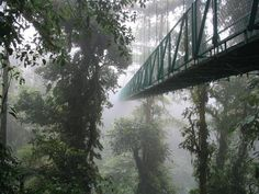 Monteverde Cloud Forest Reserve in Monteverde, Costa Rica. A tropical rainforest with very high biodiversity. Monteverde, Costa Rica Travel, Puntarenas, Beautiful Forest, Beautiful Places, Magical Forest, Belize, Cloud Forest Costa Rica, Wild Life
