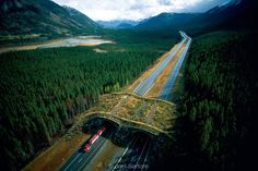 Wildlife overpass in Banff National Park - To reduce the effect of the four lane highways, 24 vegetated overpasses and underpasses were built to ensure habitat connectivity and protect motorists. These passes are used regularly by bears, moose, deer, wolves, elk and many other species.