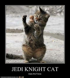JEDI KNIGHT CAT
