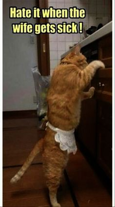 Great > Funny Cat Photos With Captions #exceptional