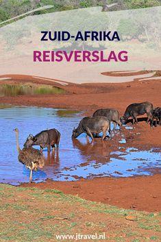 Hier vind je mijn reisverslagen van mijn 23-daagse rondreis door Zuid-Afrika. Lees je mee? #zuidafrika #reisverslag #jtravel #jtravelblog #reisverslagzuidafrika