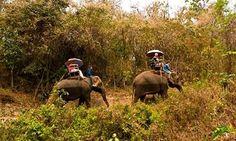 Thai Elephant Conservation Center, near Lampang, Thailand